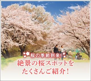 絶景の桜スポットをたくさんご紹介