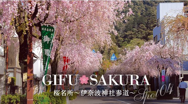 桜の名所伊奈波神社参道