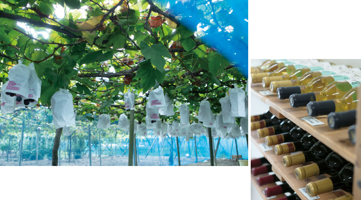 長良天然ワイン醸造サブ